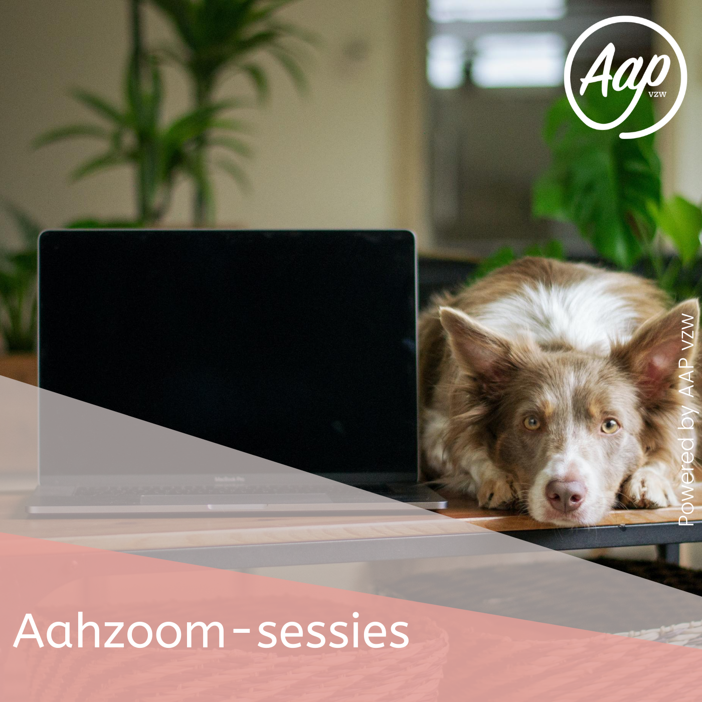 Aahzoom-sessies | online lessen